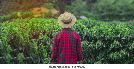 Farmer with hat in cultivated coffee field plantation. Concept Image.