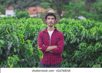 Farmer with hat, smiling in cultivated coffee field plantation. Concept Image.