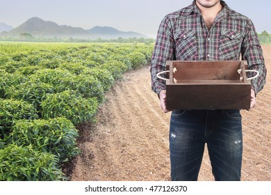 farmer in a hat standing proud holding empty wooden box at agricultural fields