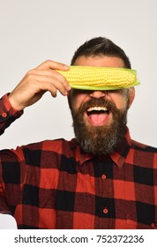 Farmer with hidden cheerful face with yellow corn covering his eyes. Guy shows his harvest. Man with beard holds ripe corn cobs isolated on white background. Farming and autumn crops concept