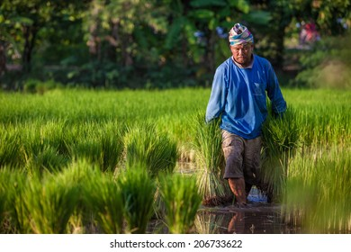 farmer in his field