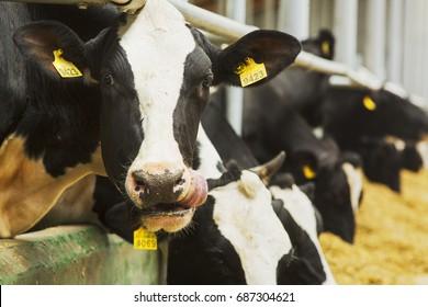 Imágenes, fotos de stock y vectores sobre Hit the Hay
