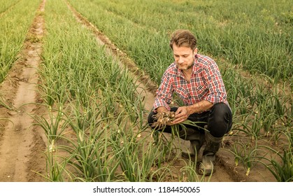 Farmer holding bunch of young onions - country outdoor landscape. Agriculture - fresh spring harvest from the field.