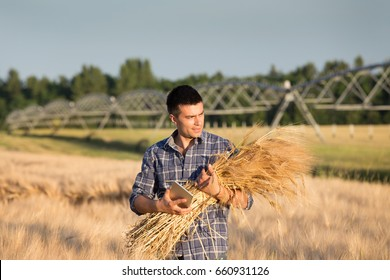 Farmer holding bundle of barley stems and tablet in front of irrigation system in field