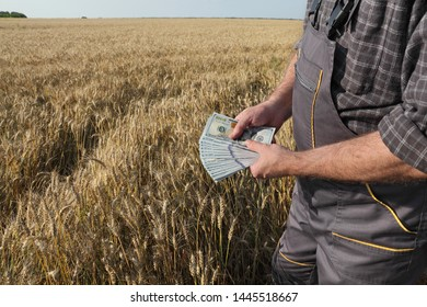 Farmer  holding dollar banknote in wheat field and counting money
