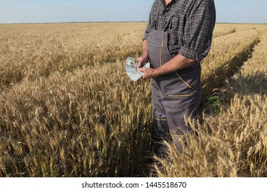 Farmer  holding dollar banknotes in wheat field and counting money