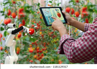 Farmer holding a tablet smart arm robot harvest work agricultural machinery technology