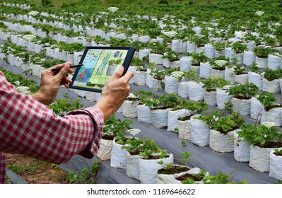 Farmer holding a tablet strawberry smart arm robot work agricultural machinery technology