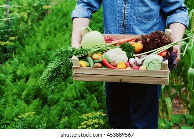 The farmer holds in his hands a wooden box with a crop of vegetables and harvest of root on the background of the garden. Fresh and organic food.