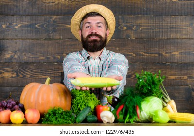 Farmer with homegrown harvest. Farmer rustic villager appearance. Grow organic crops. Farmer straw hat presenting fresh vegetables. Man cheerful bearded farmer hold corncob or maize wooden background.