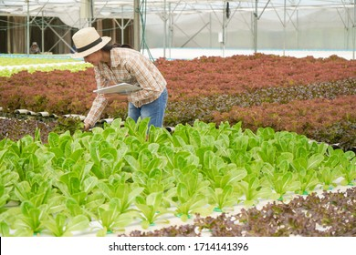 Farmer inspect, check and take care farm products and fresh vegetables in greenhouse or organic farm with happy for food supply chain and delivery to customer, hydroponic farm and agriculture concept