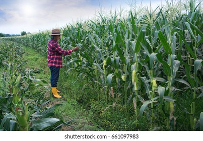 Farmer inspect quality of corn, corn field in the morning and beautiful clouds in the sky