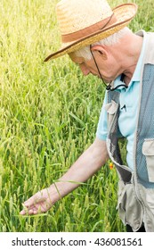 Farmer inspecting green wheat field on the sunny day