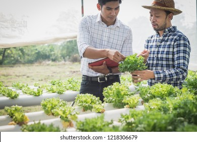 farmer inspecting hydroponic farm and observing growth vegetable Meticulously after delivered to the customer
