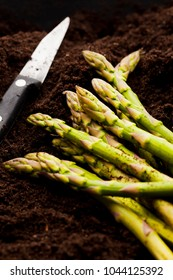 Farmer just cut organic asparagus in field
