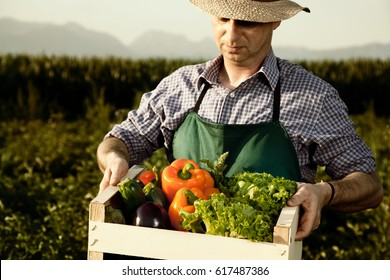 farmer with just gathered vegetables in box