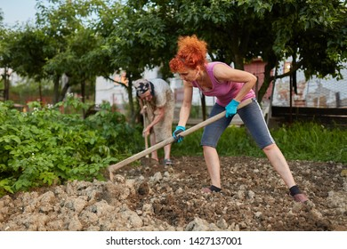 Farmer lady and her daughter hoeing in the garden