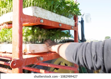 Farmer loading trays on  transplanter machine. Motion blurred shot