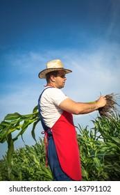 Farmer looking at corn in a field
