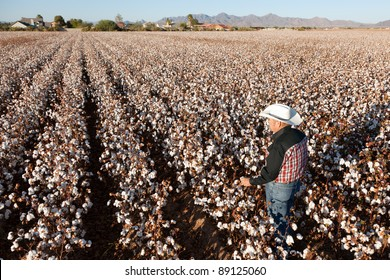 Farmer Looking Out Over a Field of Cotton