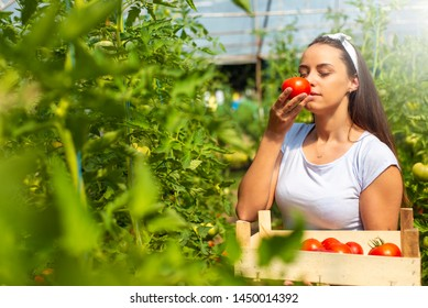 Farmer making report while smelling tomato  in hothouse