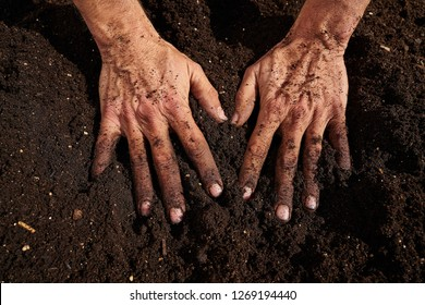 Farmer man hands dirty on substratum of urban garden orchard