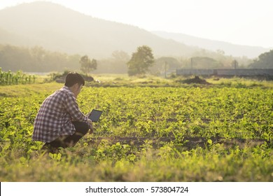 Farmer man read or analysis a report in tablet computer on a agriculture field with vintage tone on a sunlight,agriculture concept.