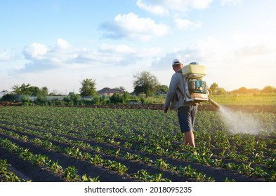 A farmer with a mist fogger sprayer sprays fungicide and pesticide on potato bushes. Effective crop protection, impact on environmental. Protection of cultivated plants from insects and fungal.