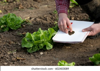 Farmer with notebook and pencil checking green salad quality and plant disease in vegetable garden