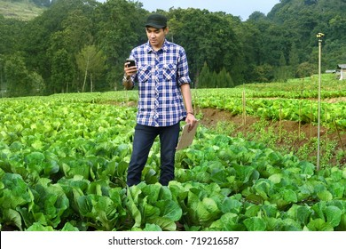 farmer on cabbage field with check this Using a Tablet