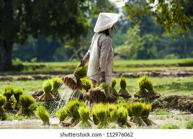 Farmer on the field in Laos