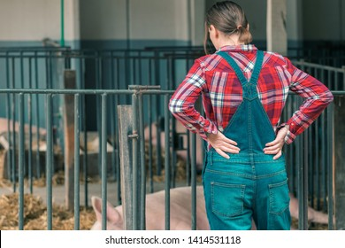 Farmer on pig raising and breeding farm. Female in plaid shirt and  jumpsuit overalls jeans with suspenders is looking at domestic pigs sleeping in pigpen.
