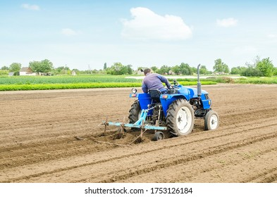 Farmer on a tractor with a cultivator processes a farm field. Soil preparation, cutting of rows for planting crop plants. Farming agribusiness. Agricultural industry. Growing vegetables food plants.