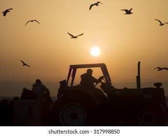 Farmer on a tractor in the field, sunset with orange sun and birds flying