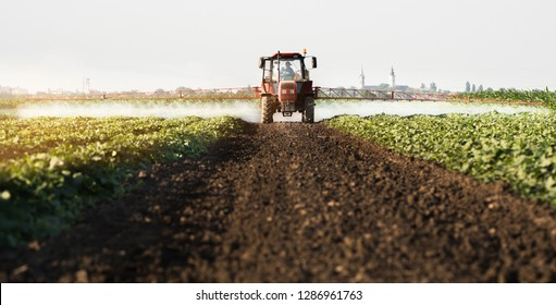 Farmer on a tractor with a sprayer makes fertilizer for young vegetables