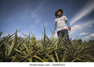 Farmer in pineapple farm with blue sky , Eastern of Thailand