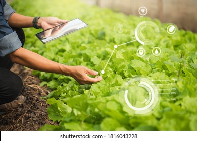 Farmer Plantation checking quality by tablet agriculture modern technology Concept. Smart farming, using modern technologies in agriculture. Man agronomist farmer with digital tablet computer. - Shutterstock ID 1816043228
