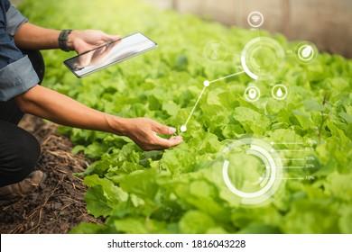 Farmer Plantation Überprüfung der Qualität durch Tablet Landwirtschaft moderne Technologie Konzept. Intelligente Landwirtschaft unter Einsatz moderner Technologien in der Landwirtschaft. Der Mensch agronomistischer Bauer mit digitalem Tablet-Computer.