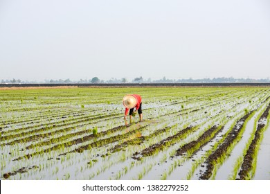 Agriculture Images, Stock Photos & Vectors | Shutterstock