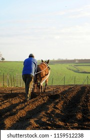 Farmer plowing the land with an old and traditional plow pulled by a mule, Spain