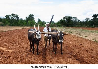 Farmer plows the fields