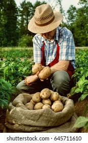 farmer and potato harvest