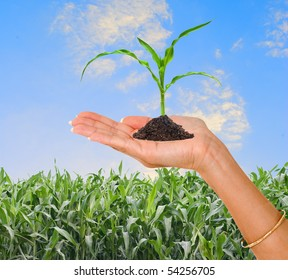 Farmer presenting corn shoot as a gift of agriculture
