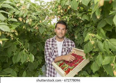 Farmer presenting her red fruits harvest