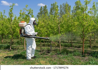 Farmer in Protective Equipment Spraying Fruit Orchard With Atomizer Sprayer. Man in Coveralls With Gas Mask Spraying Orchard in Springtime. Spraying Trees With Toxic Pesticides or Insecticides.