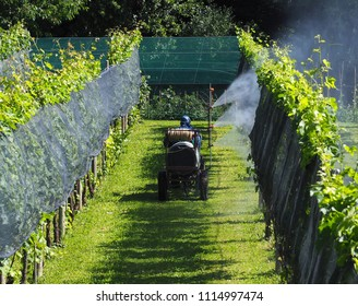 A farmer with protective suit, on an agricultural vehicle, sprays chemical pest control on the vineyards