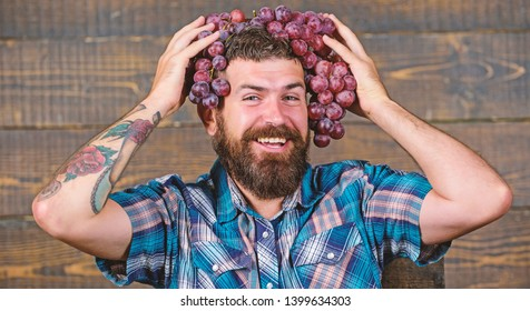 Farmer proud of grapes harvest. Man hold grapes wooden background. Fresh organic harvest. Farmer bearded guy with homegrown harvest grapes put on head. Grapes from own garden. Farming concept.