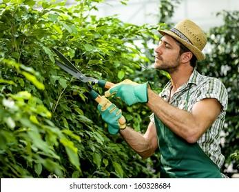 farmer pruning plants
