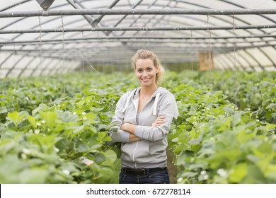 Farmer in a red fruits greenhouse