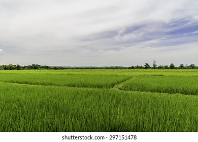 Farmer and Rice Field
